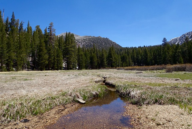 Meadow on the way up to Sally Keyes Lakes