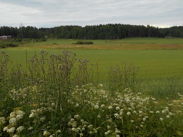 Niittykasveja 12.7.2015 B Espoon Karakallion ja Leppävaaran välinen peltoalue