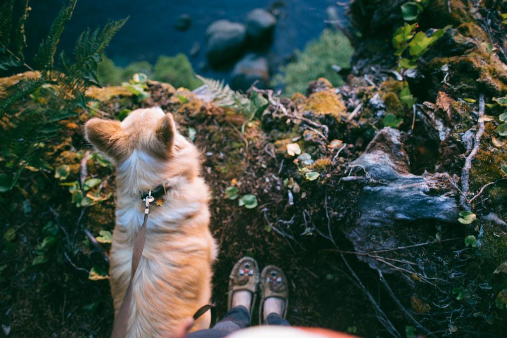 Neah Bay, Cape Flattery Adventure | Liz Morrow Studios