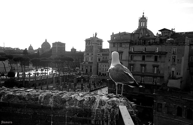 Seagull looking over Rome