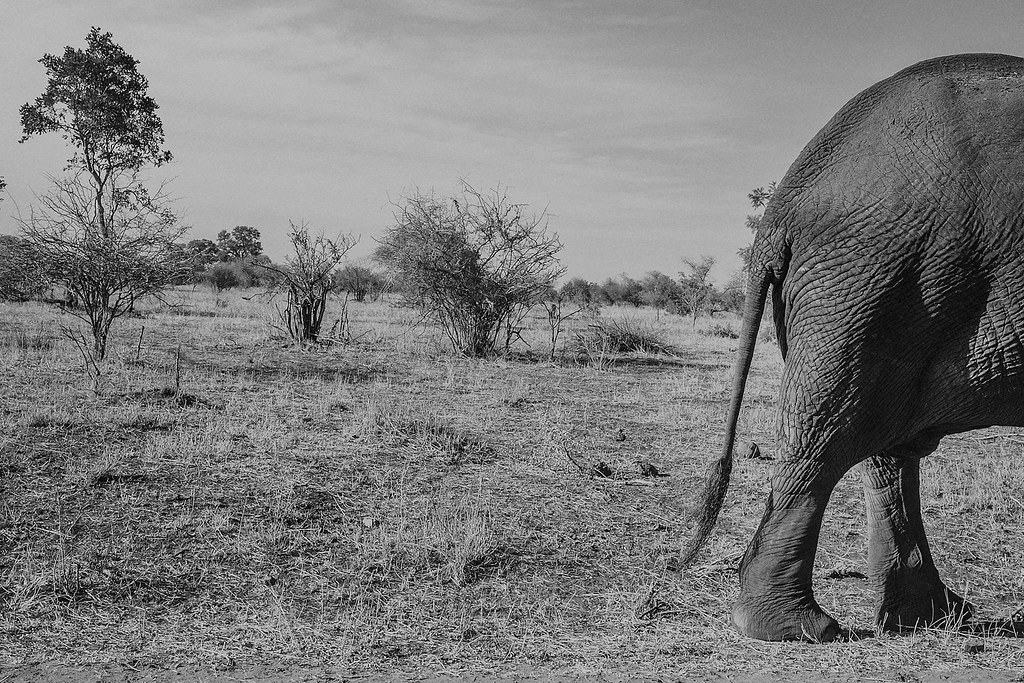 moz_southAfrica_024