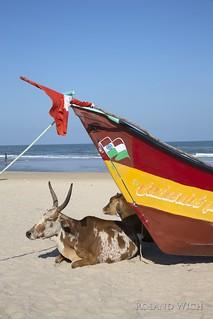 Mahabalipuram - Beach Life