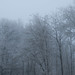 Winter Forest outside of Paris by mistca