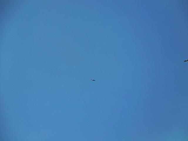 023b Bald Eagles Overhead, Nikon COOLPIX S6800
