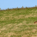Hare Fence Friday ! HFF