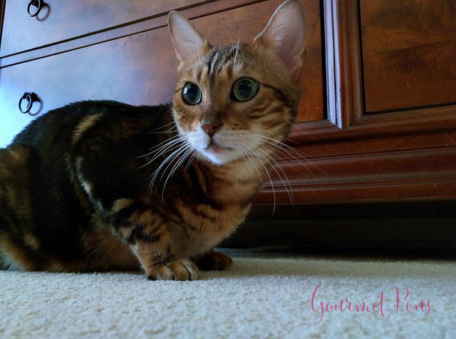 Whiskers & Paws December 2016 Edition (5)