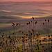 Wild Grasses - Steptoe Butte Sunset by Marsha Kirschbaum