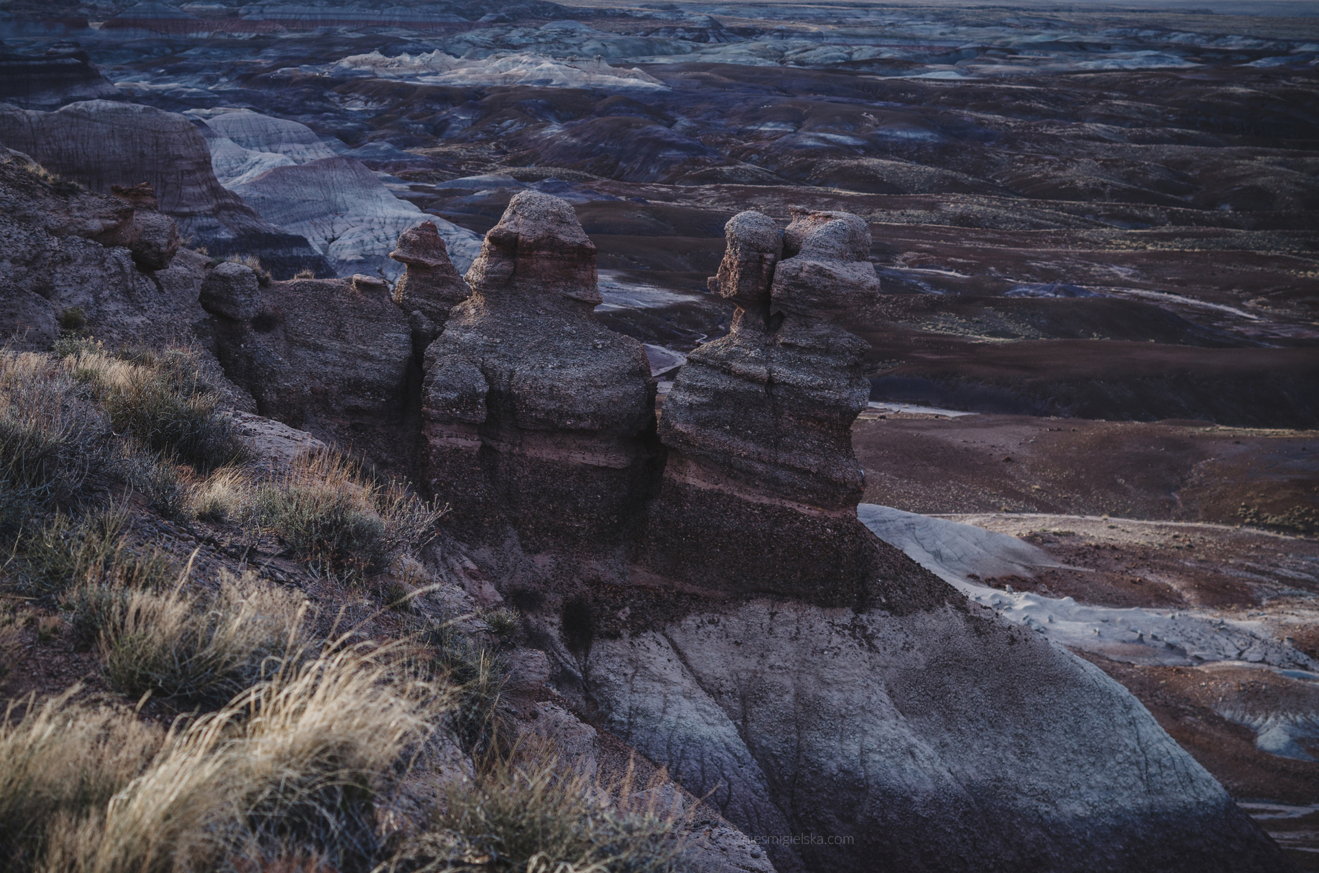 blue mesa petrified forest