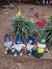 Gnome nexus