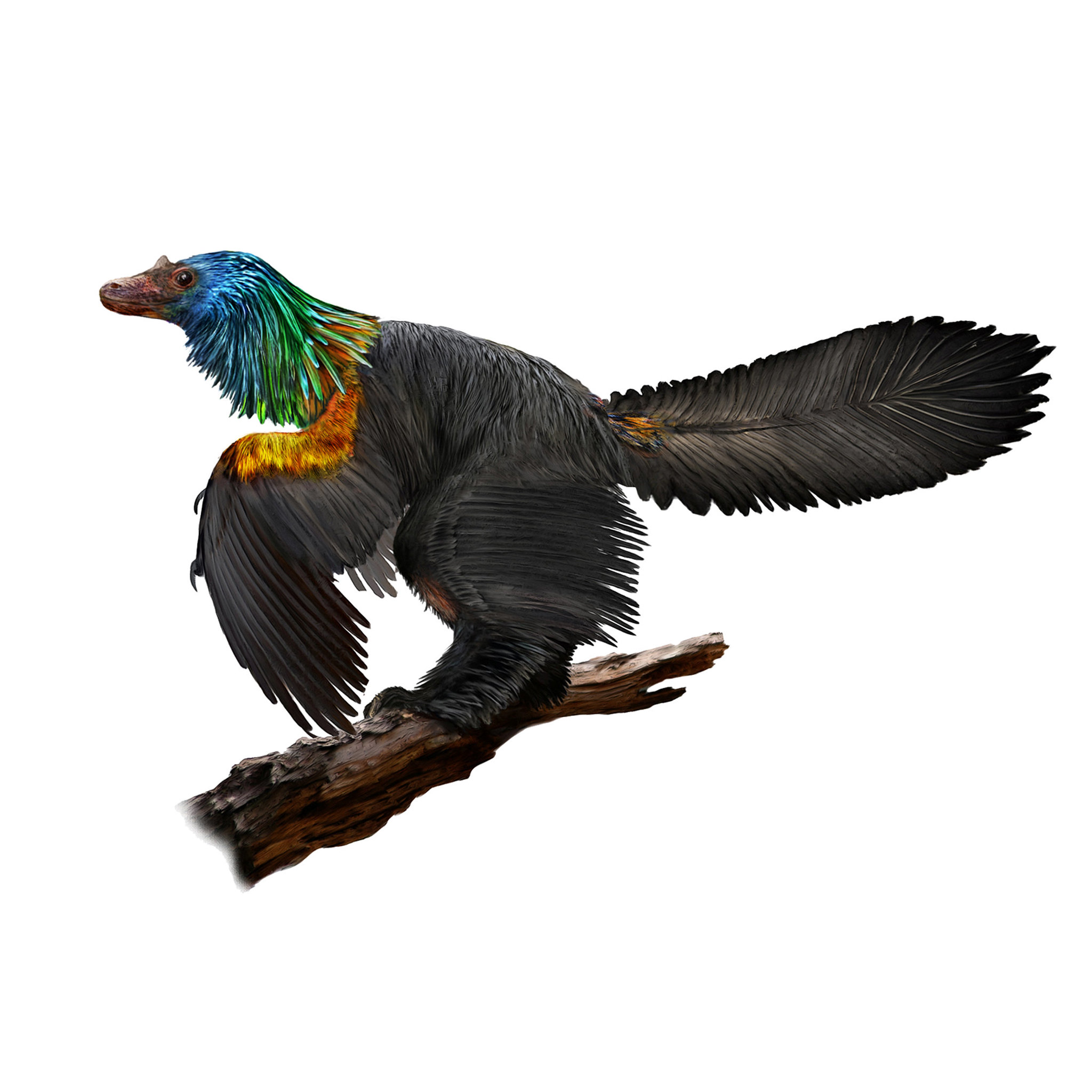 New dinosaur species with colorful feathers discovered in China
