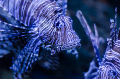 Aquarium of the Smokies-68