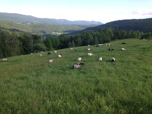 The views at Knoll Farm