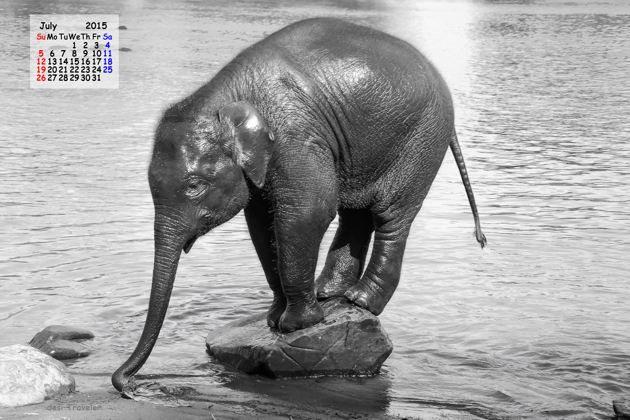 July 2015 desktop calendar download  Baby Elephant