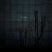 fluorescent life by -dubliner-