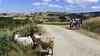 Manifestation d'éleveurs