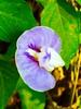Purple flower 🌸