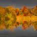 l'autunno si specchia by gianpietromedaglia
