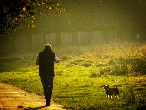 Bushy Park Autumn - 09