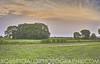 Arthur R Marshall Landscape