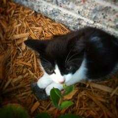 Already earning her keep... #Stella #Mouser #Predator #BarnCat #FarmLivin #CatsOfInstagram