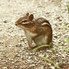 The #chipmunks followed us everywhere on our #hike #nature #summer