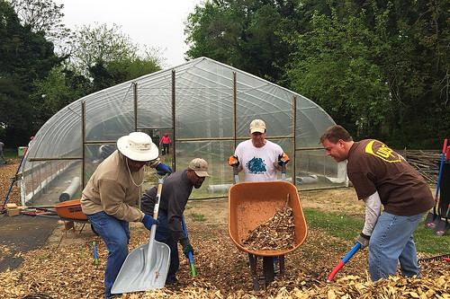 Volunteers shoveling wood chips to be spread in the high tunnel