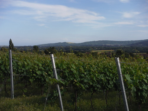 Upperton Vineyard with South Downs