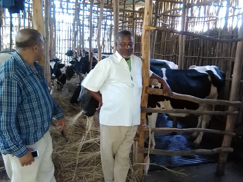 Yusuf, a member of a dairy cooperative in Gerba village, who uses cow mats as a demonstration farmer