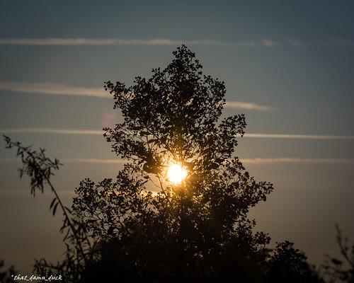 sunrise nature dawn tree