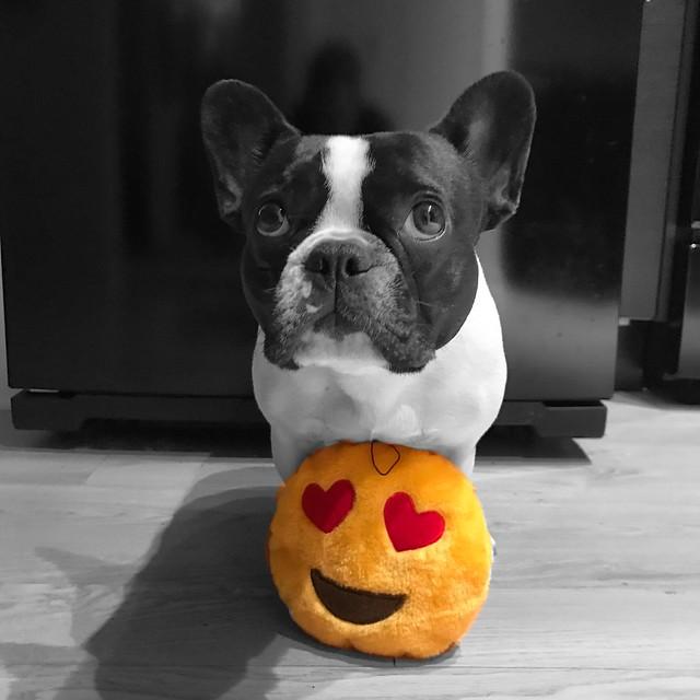 My favorite emoji is 😍
