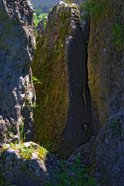 The mossy rocks