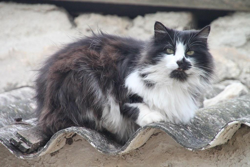 chat qui miaule, Malmousque, Marseille
