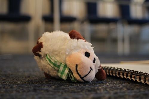 A dead sheep!
