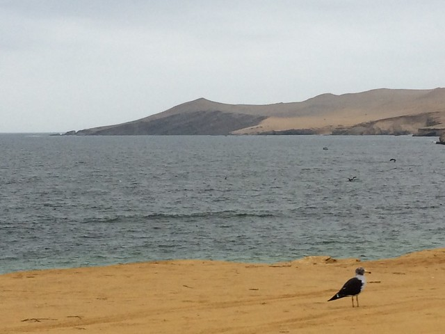 View from Playa Roja - Paracas Reserve