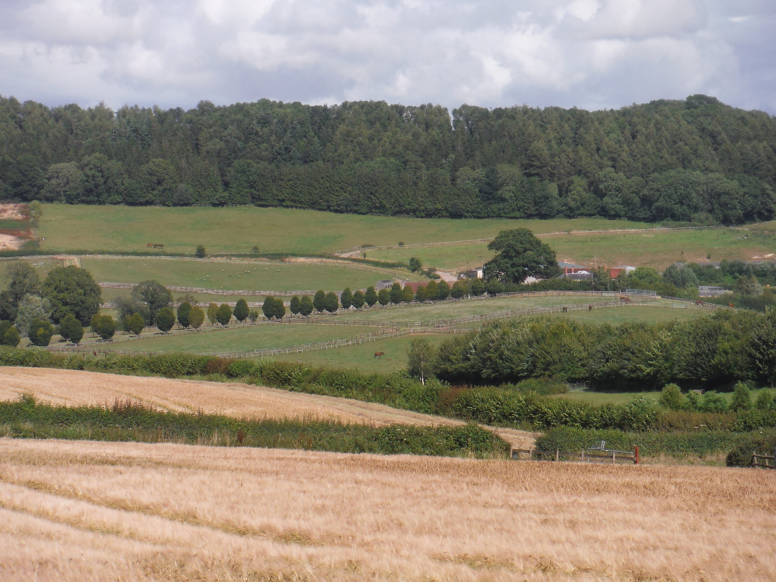 Withyslade Farm and Castle Ditches Iron Age Hill Fort Site SWC Walk 252 Tisbury Circular via Donhead St. Andrew