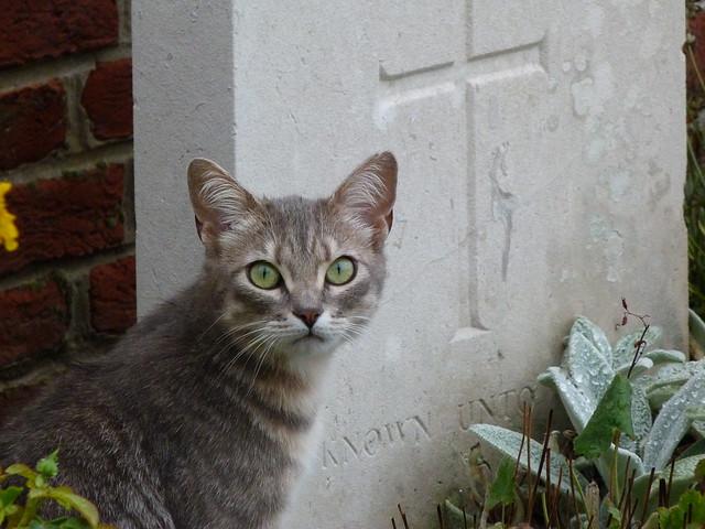 Gato junto a una tumba de un soldado desconocido de la I Guerra Mundial (Fromelles, Francia)