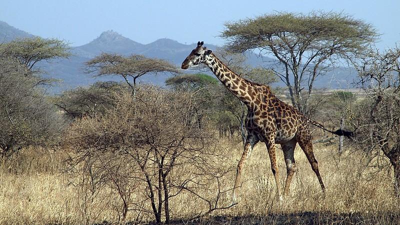 Serengeti National Park, TANZANIA, July 2013