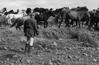 21 - Old man and horses