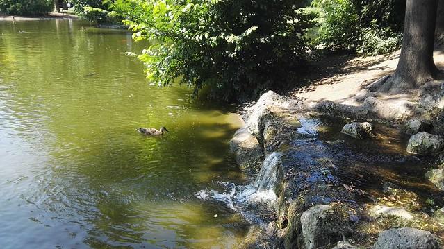 Eine Ente im Teich mit einen kleinen Wasserfall