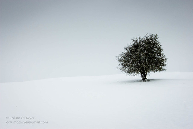 Lonely Tree, Old Kilcullen.