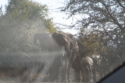 More elephants in the trees
