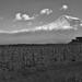 Khor Virap monastery and Ararat by Massis__