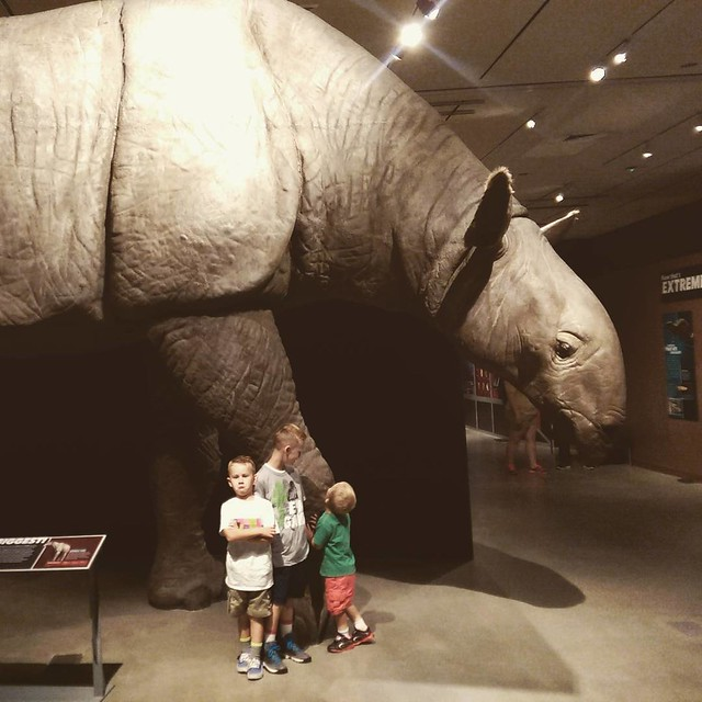 "Today's summer adventure... As you can see, Quinn is quite enamored by the giant ""rhinoceros"""