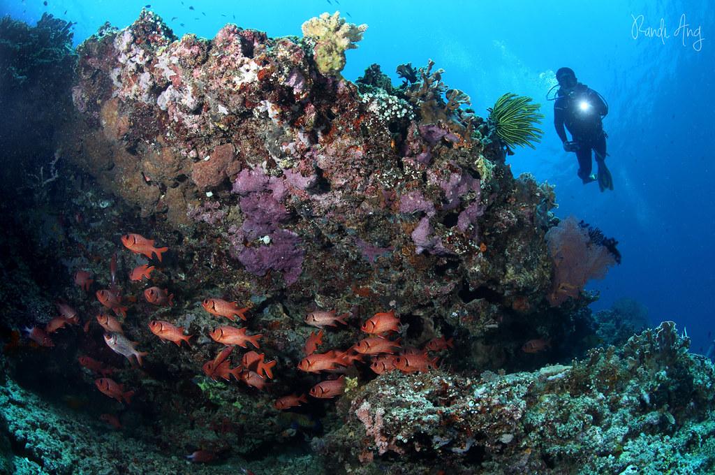 Fishy under....