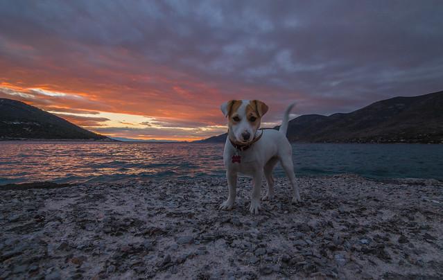 A beautiful friend at sunset