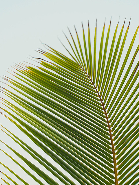 Palm frond swaying in the wind