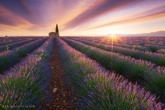 Douceur Provençale