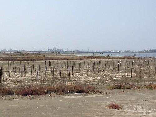 由草澤、池塘、魚塭、溝渠以及部份休耕農田所組成的成龍溼地。