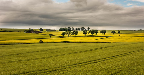 cloud tree field contrast rural gold scotland unitedkingdom farm kirkcaldy grren