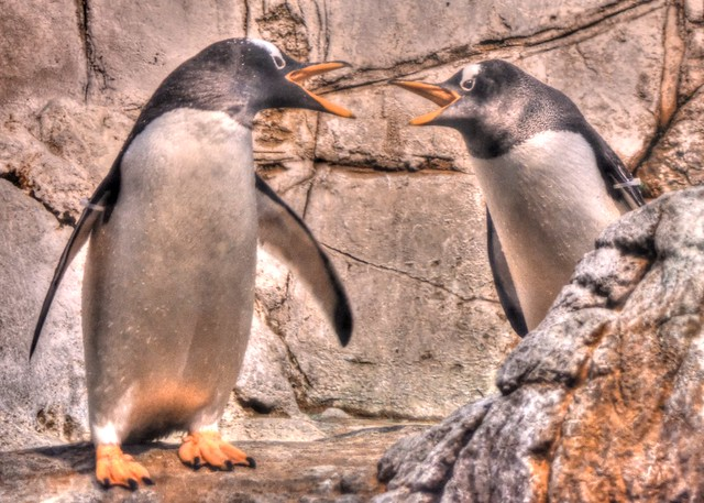 Penguins at the Indianapolis Zoo